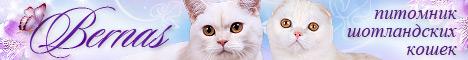 """Питомник шотландских кошек """"Bernas"""""""